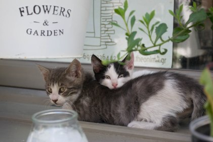 """Sister got too scared curled inside brother's fur, so she hid behind him instead. """"Surely the human can't see me here."""""""