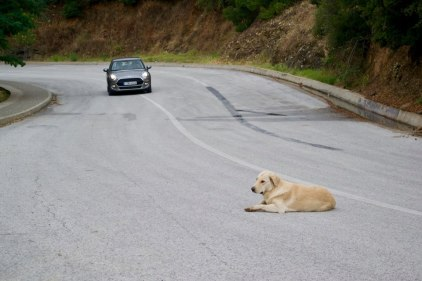 Dogs here have no sense of mortality. Dog will lay in the middle of the street, wherever he damn well pleases (don't worry, no dogs were harmed in the making of this photo)