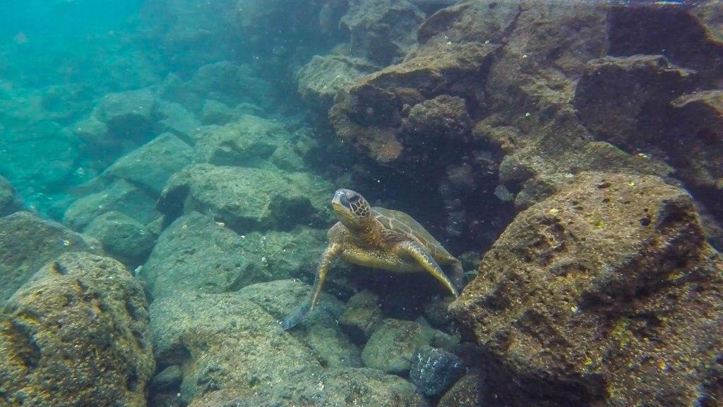 Go Pro Turtle2